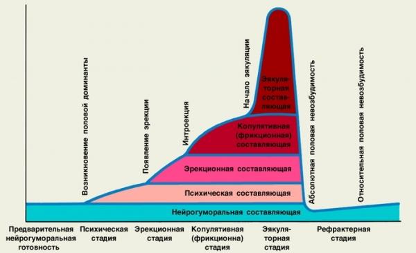 График женского возбуждения