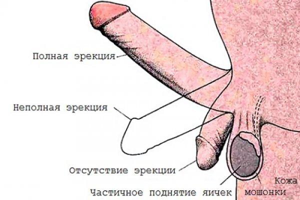 При нормальной эрекции у мужчин для дополнительной стимуляции назначается минимальная доза препарата