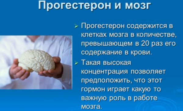 Прогестерон и мозг