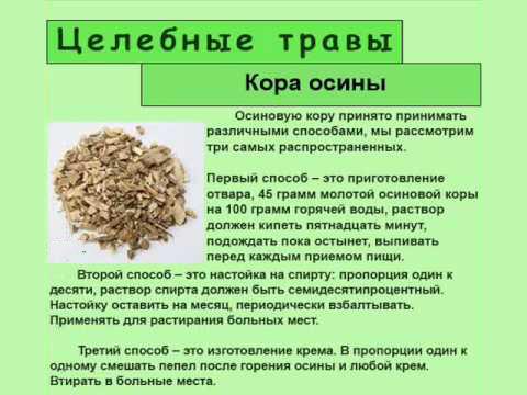 Польза осиновой коры