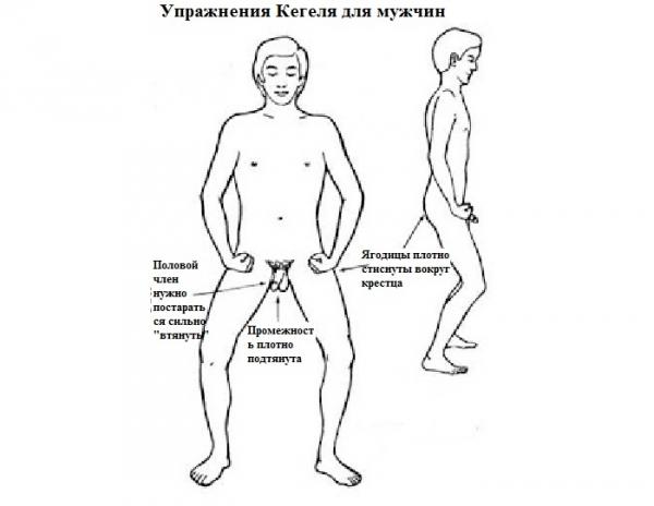 Интимная гимнастика для мужчин при простатите