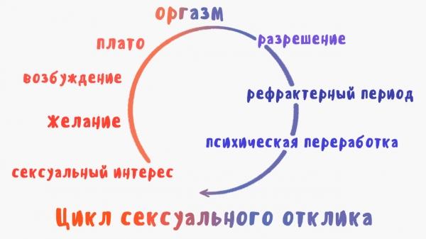 Цикл сексуальной жизни организма
