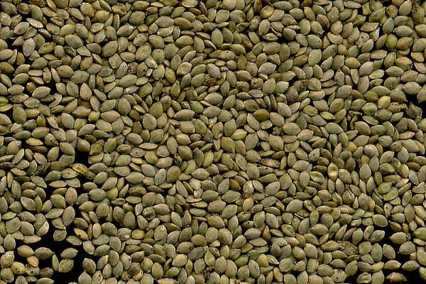 Как выглядят семена крапивы