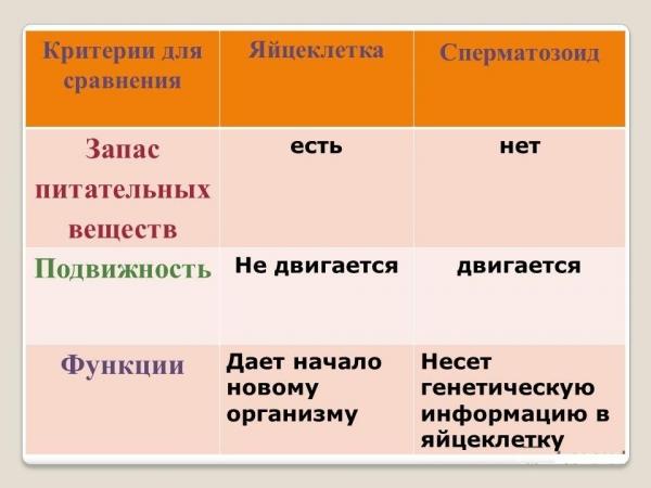 Функции сперматозоидов
