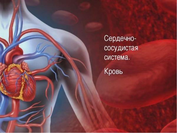Заболевания сердечно-сосудистой системы негативно влияют на потенцию