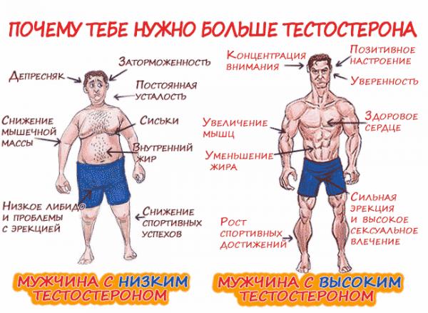 важность мужского гормона тестостерона